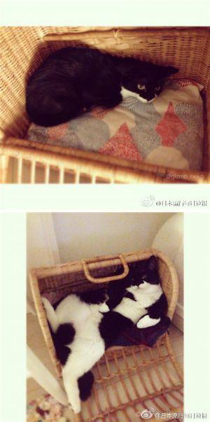 某推友翻出给家猫一年前拍的照片,-1