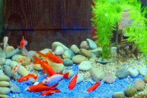 【鱼缸知识百科】鱼缸的详细分类大全-3