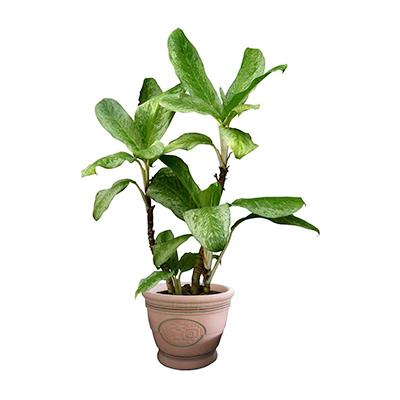 仿真植物哪个牌子好_2020仿真植物十大品牌-百强网